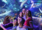 Legoland Aquarium ist ein Erlebnis