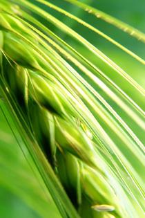 Der weite und spannede Weg vom Korn zum Mehl in der Engelhardt Mühle in Attenhofen bei Weißenhorn - Eine lebendige Führung bei laufendem Betrieb